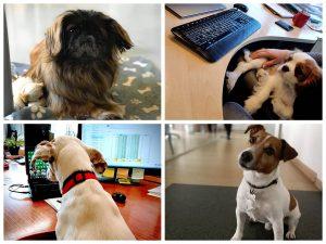 nacionaline suns diena